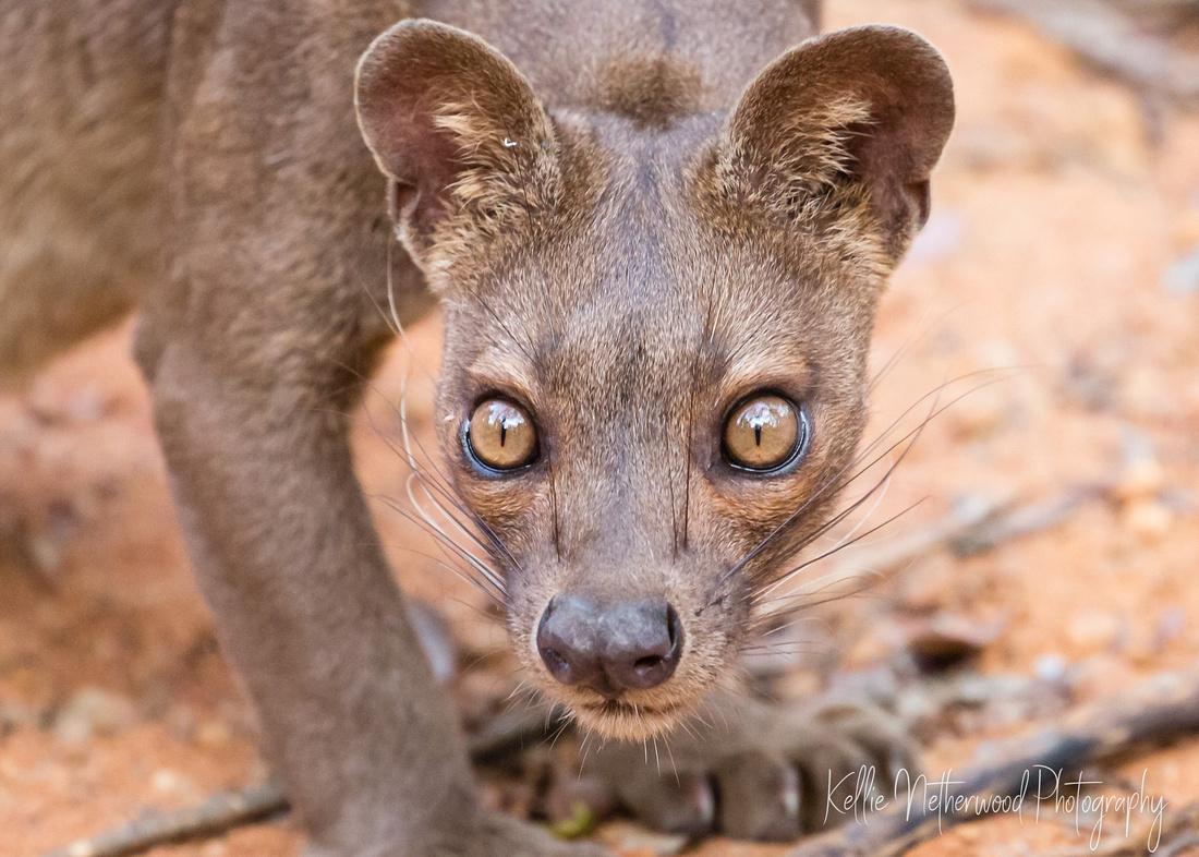 Travel tips for Madagascar