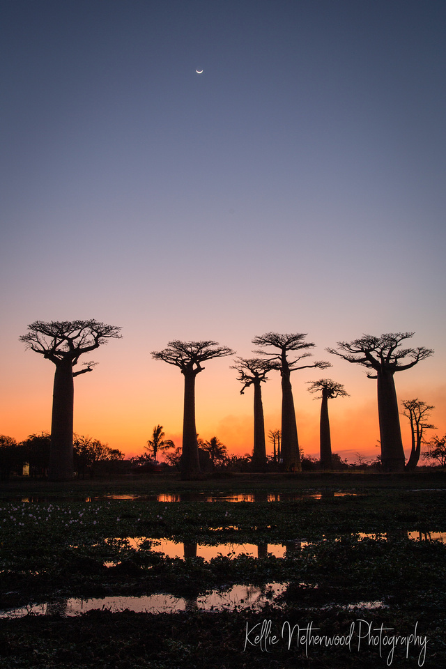 Sunset at the Avenue of Baobabs, Madagascar